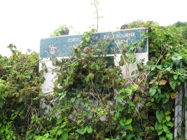 Overgrown allotments