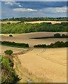 SU5680 : Path through chalk downland near Westridge Green, Berkshire by Edmund Shaw