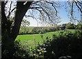 SX3472 : Field at Polhilsa by Derek Harper