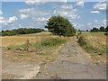 SU8772 : Farming landscape near Warfield by Alan Hunt