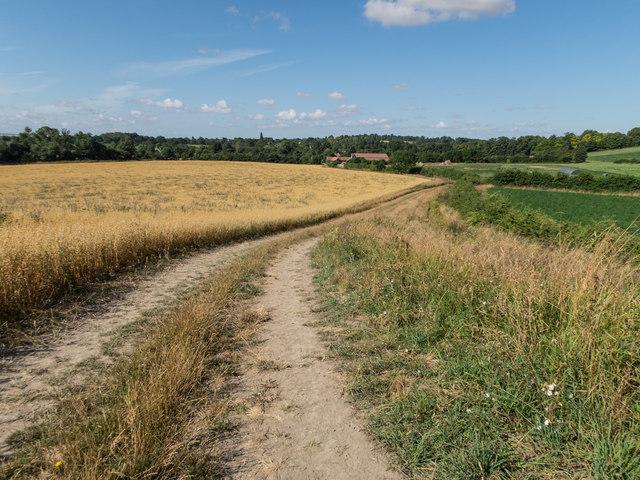 Farm Track above Cobbs Wood Farm
