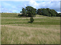 NY5443 : Parkland landscape at Staffield by Oliver Dixon