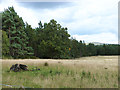NY5446 : Southern edge of Broomrigg Plantation by Oliver Dixon