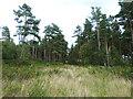 NY5446 : Broomrigg Plantation by Oliver Dixon