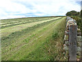 NY5844 : Freshly mown field near Lincowell by Oliver Dixon