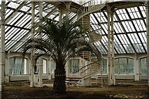 TQ1876 : The Temperate House, Kew Gardens by Peter Trimming