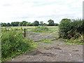 SU8572 : Field off Ryehurst Lane by Alan Hunt