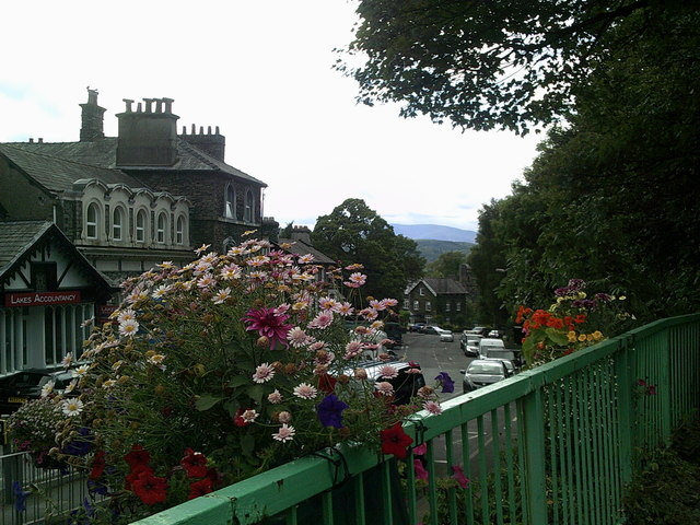 Flowers in the foreground, start of a walk up Orrest Head