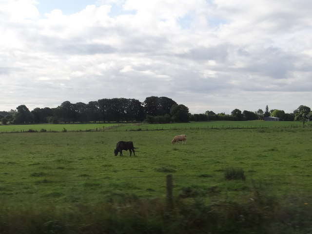 Field with cattle
