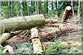 J3369 : Felled trees, Belvoir forest, Belfast - August 2014(1) by Albert Bridge