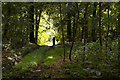 TG1628 : Track into Hercules Wood from the main road by Christopher Hilton