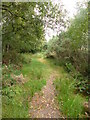 SY8186 : East Knighton, path by Mike Faherty