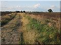 TL3872 : Long Holme Drove by Hugh Venables
