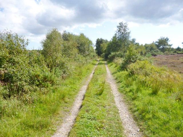Winfrith Heath, track