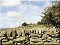 NZ1158 : Stone wall near Ashtree farm by Robert Graham