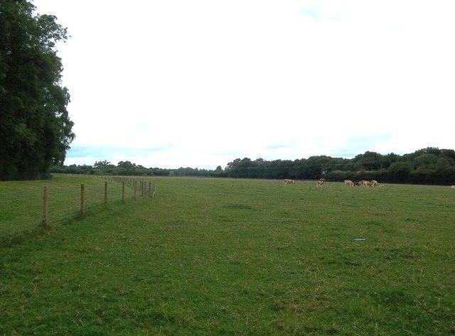 Flat Grazing Land near Foston