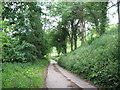 ST8194 : June further along a Cotswold lane-Newington Bagpath, Glos by Martin Richard Phelan