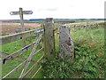 SE8391 : OS bench mark on stone gatepost by Pauline E