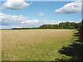 TQ0550 : Field on chalk downland by Alan Hunt