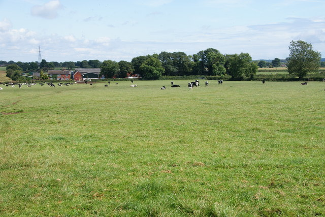 A field of cows by Loxley Green