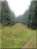 NN9047 : Track, Griffin Forest by Richard Webb