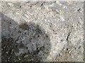 SO9392 : Fossils in the Nodular Limestone Member, Wren's Nest by Rudi Winter