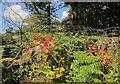 SX7277 : Tutsan, Bonehill by Derek Harper