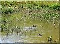 SX9253 : Lagoon, Man Sands by Derek Harper