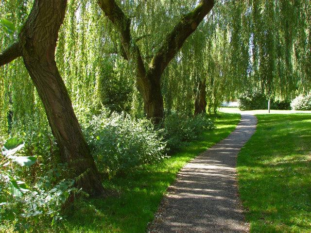 Walkway through the willows
