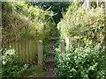 SJ5783 : Steps from Keckwick Lane leading to Daresbury Firs by Raymond Knapman