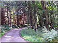 NJ6101 : A bend in the road through Footie Wood by Stanley Howe