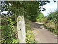SJ6083 : Delamere way marker post near Hurst Farm by Raymond Knapman