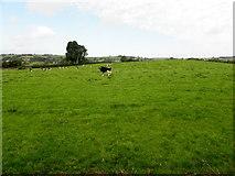 H6058 : Tullylinton Townland by Kenneth  Allen