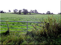 H6058 : Gate, Tullylinton by Kenneth  Allen