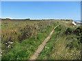 TA2469 : Towards Flamborough Head along South Cliff by Pauline E