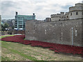 TQ3380 : Poppies in the Moat, Tower of London, E1 by Christine Matthews
