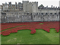 TQ3380 : Plaque about Poppies in the Moat, Tower of London, E1 by Christine Matthews