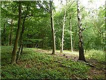TQ0199 : In Baldwin's Wood by Robin Webster