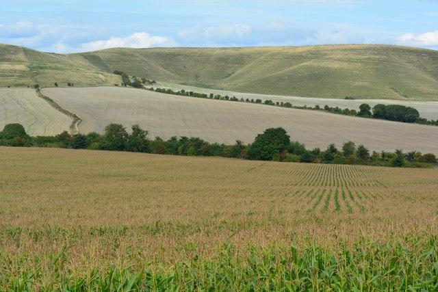 View towards the Marlborough Downs, Allington, Wiltshire