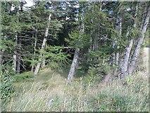 NN8929 : Woodland, Sma Glen by Richard Webb
