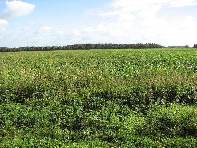 Fields by Rackheath