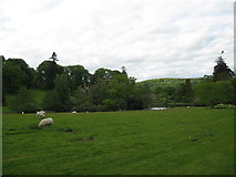 SO3671 : Silence of the lambs-Brampton Bryan, Herefordshire by Martin Richard Phelan