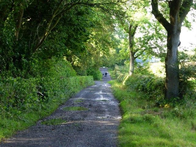 Dog walker on country lane