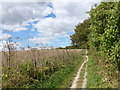 SU6022 : South Downs Way, Winchester to Exton (168) by Basher Eyre