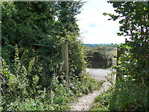 SU6022 : South Downs Way, Winchester to Exton (169) by Basher Eyre