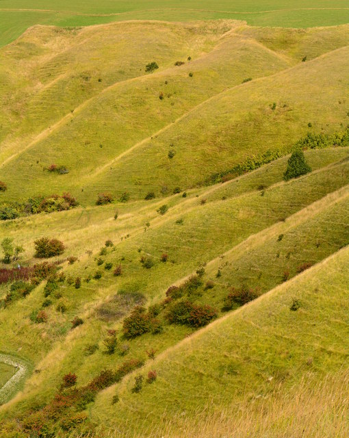 Downland between Oliver's Castle and Beacon Hill, Wiltshire
