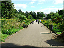 NS5766 : The Herbaceous Border by Thomas Nugent