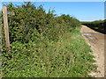 TF8640 : Restricted Byway near Burnham Thorpe by Richard Humphrey