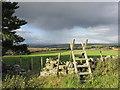 NY6858 : The edge of Beaconhill plantation. by steven ruffles