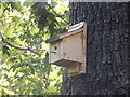 TQ1776 : Bird box on Oak Tree by Hamish Griffin